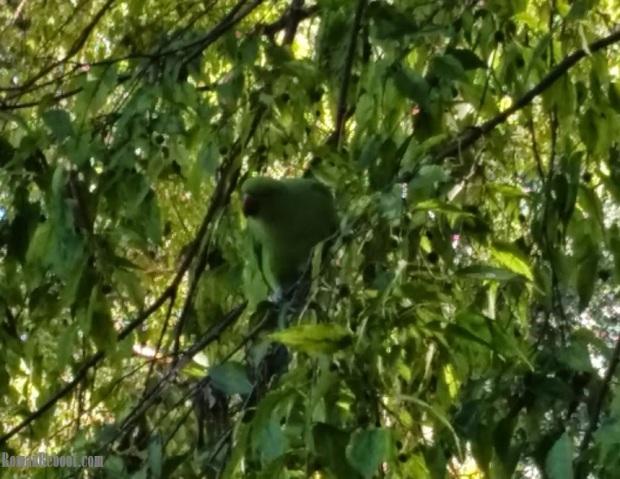 9.16_green bird